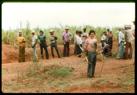 brazil sugar cane workers